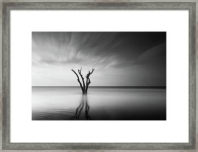 Prongs Framed Print by Ivo Kerssemakers