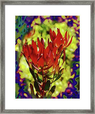 Protea Flower 4 Framed Print by Xueling Zou