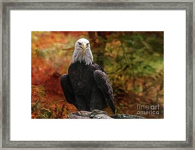 Proud Eagle Framed Print by Geraldine DeBoer