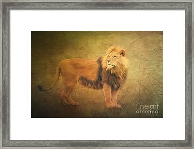 Proud Lion Framed Print by Jutta Maria Pusl