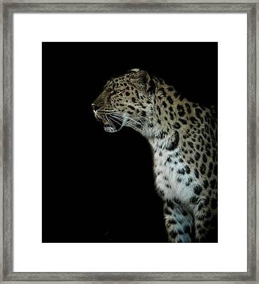 Prowl Framed Print by Paul Neville