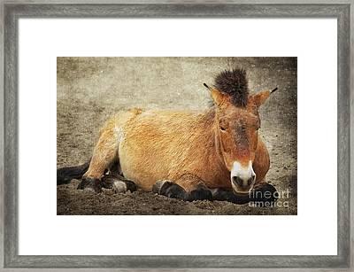 Przewalski-horse Framed Print by Angela Doelling AD DESIGN Photo and PhotoArt