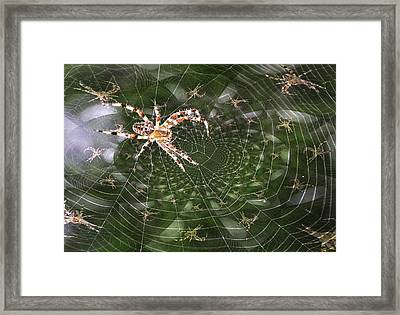 Psych Spider Framed Print by Rick DiGiammarino