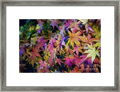 Psychedelic Maple Framed Print by Kaye Menner