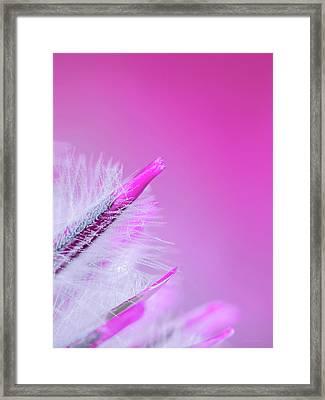 Ptilotus Macro Framed Print by Wim Lanclus