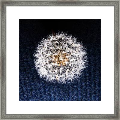 Puff Framed Print by Phillip Schafer