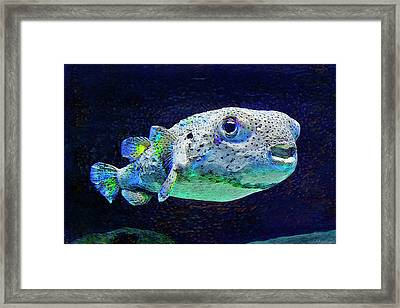 Puffer Fish Framed Print by Jane Schnetlage