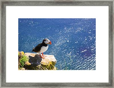 Puffin In Iceland - King Of The Hill Framed Print by Matthias Hauser