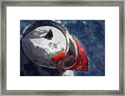 Puffin Framed Print by Jack Zulli