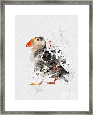 Puffin Framed Print by Rebecca Jenkins