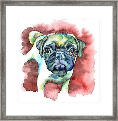 Pug In Red Framed Print by Christy  Freeman