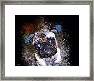 Pug Mug Shot Framed Print by Scott Wallace