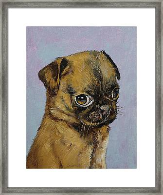Pug Puppy Framed Print by Michael Creese