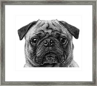 Pug T-shirt Framed Print by Edward Fielding