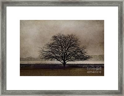 Puget Sound Framed Print by Elena Nosyreva