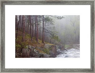 Pulse Of Spring Framed Print by Mary Amerman