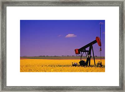 Pumpjack In A Canola Field Framed Print by Carson Ganci