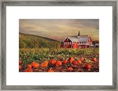 Pumpkin Farm Framed Print by Lori Deiter