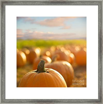Pumpkin Patch Framed Print by Alissa Beth Photography