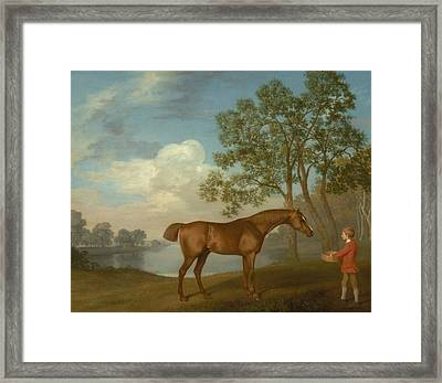 Pumpkin With A Stable-lad Framed Print by George Stubbs