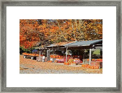 Pumpkins For Sale Framed Print by Louise Heusinkveld
