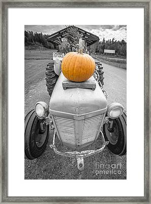 Pumpkins For Sale Vermont Framed Print by Edward Fielding