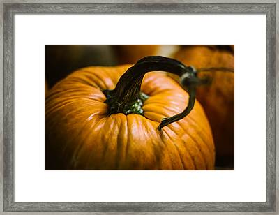 Pumpkins Love Framed Print by Britten Adams
