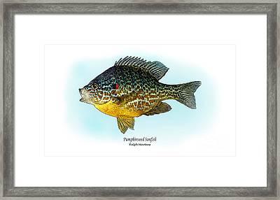 Pumpkinseed Sunfish Framed Print by Ralph Martens