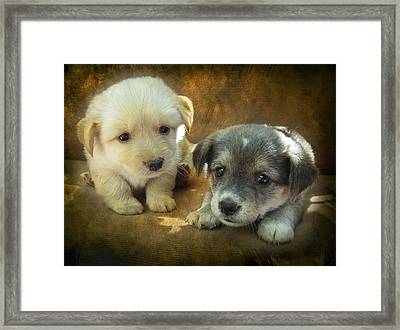 Puppies Framed Print by Svetlana Sewell
