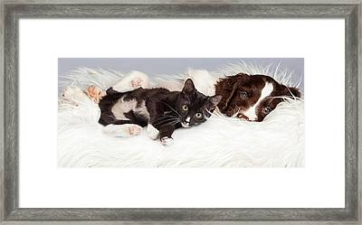 Puppy And Kitten Laying On Furry Blanket Framed Print by Susan Schmitz