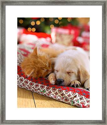 Puppy And Kitten Snuggling On Red Framed Print by Gillham Studios