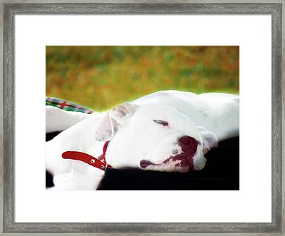 Puppy Photo Art  3 Framed Print by Miss Pet Sitter
