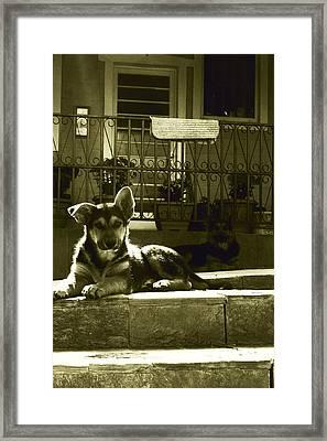 Puppy Framed Print by Emily Kemp
