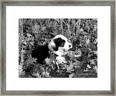 Puppy In The Leaves Framed Print by Kathleen Struckle
