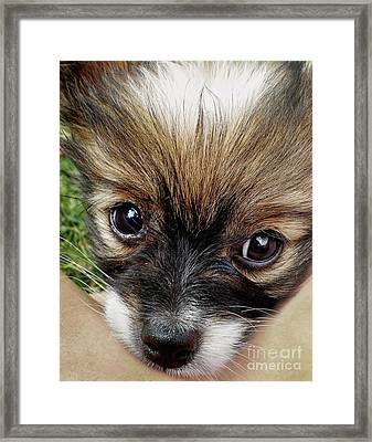 Puppy Love By Kaye Menner Framed Print by Kaye Menner