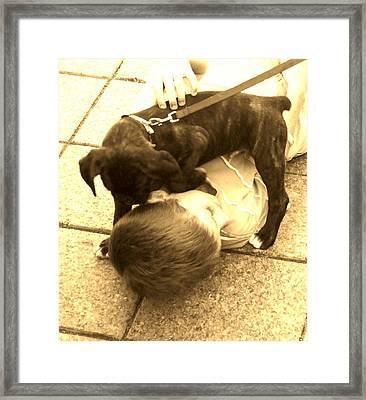 Puppy Play Framed Print by Jennifer Bonset