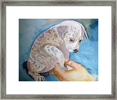 Puppy Shaking Hands Framed Print by Sandy McIntire