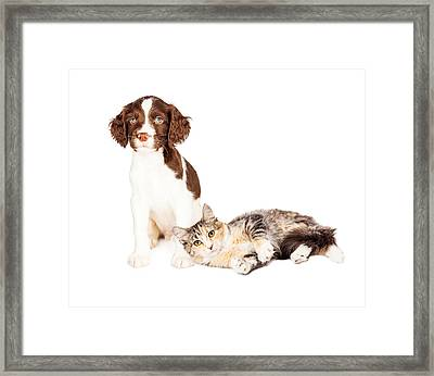 Puppy Sitting Kitten Laying With Copy Space Framed Print by Susan Schmitz