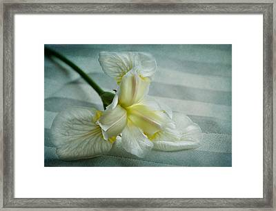 Pure And Simple Pleasures Framed Print by Maggie Terlecki