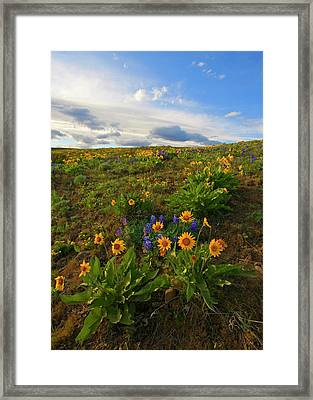 Purple And  Gold Framed Print by Mike  Dawson