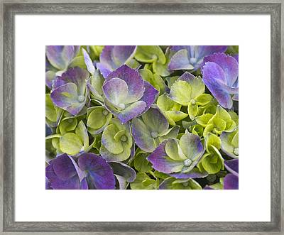 Purple And Lime Framed Print by Eggers   Photography