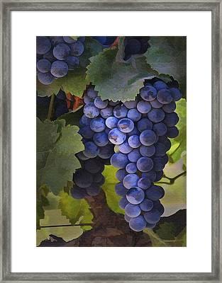 Purple Blush Framed Print by Sharon Foster