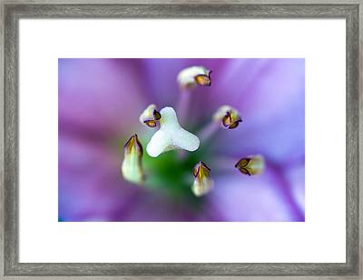 Purple Botanical Framed Print by Frank Tschakert