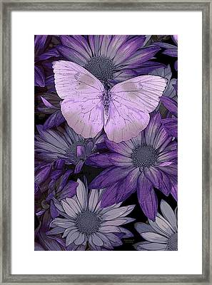 Purple Butterfly Framed Print by JQ Licensing