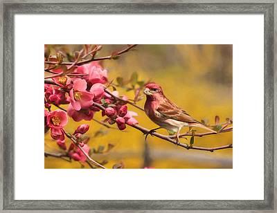 Purple Finch Framed Print by Lori Deiter