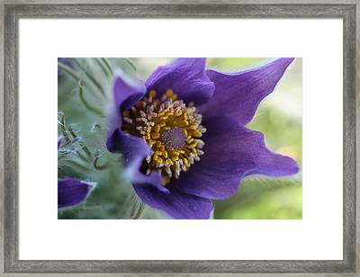 Purple Fleece Framed Print by Connie Handscomb