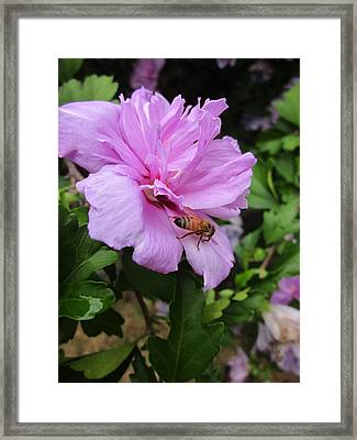 Purple Flower And Friend Framed Print by Guy Ricketts