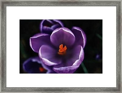 Purple Flower Framed Print by Pelo Blanco Photo