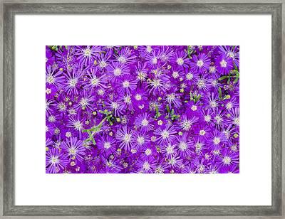 Purple Flowers Framed Print by Frank Tschakert