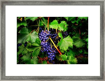 Grapes Framed Print by Greg Mimbs